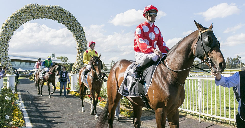 Win Up To $1,800 In Our Draftstars Tipping Challenge At Rosehill This Saturday!