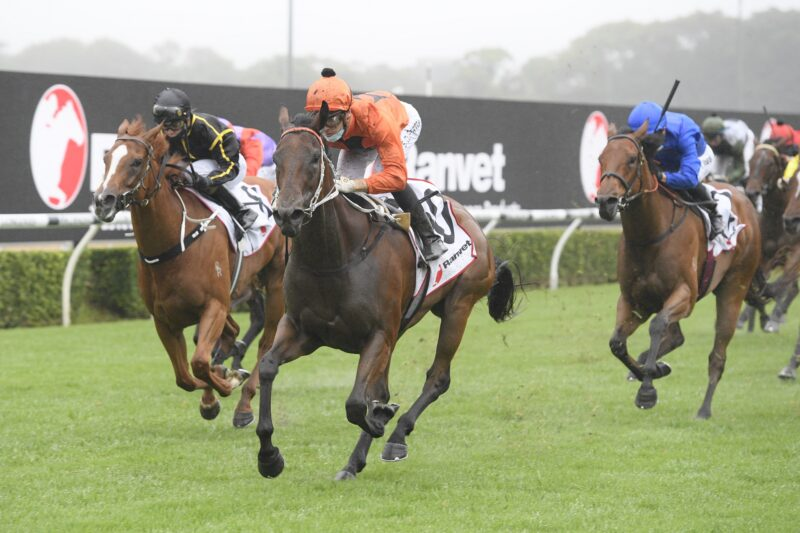 The Plunge's Saturday Review: Horses You Must Follow From Randwick 13/2