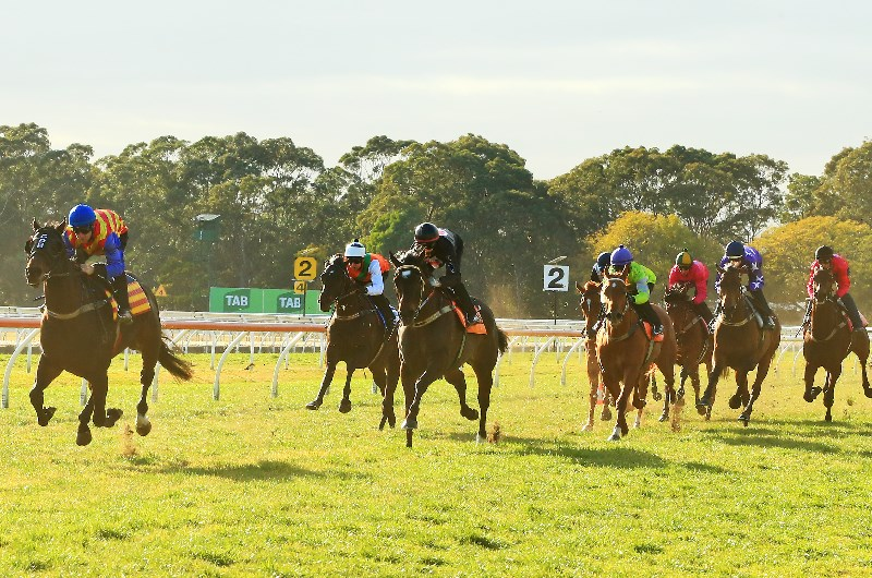 The Plunge's Trial Review: Horses You Must Follow From Last Week's Trials 22/7